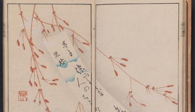 Estampe japonaise: ramifications d'un cerisier en fleur.