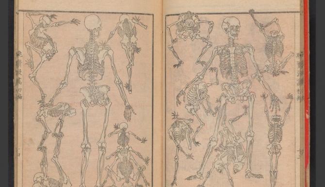 Estampe japonaise : squelette prenant de multipes poses.