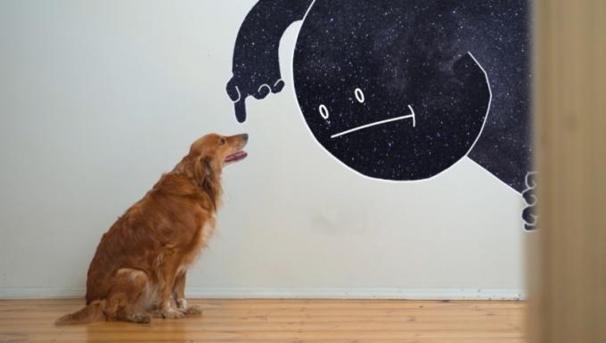 Monsieur Nuit s'apprête à toucher un chien golden retriever